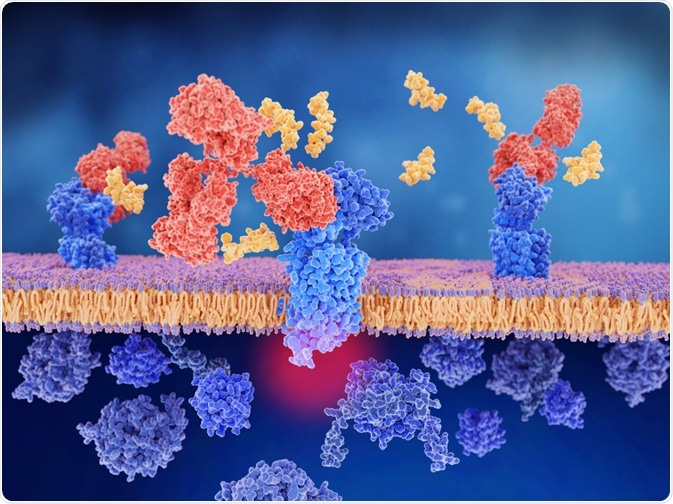 Antibodies in the brain of a person with Alzheimer