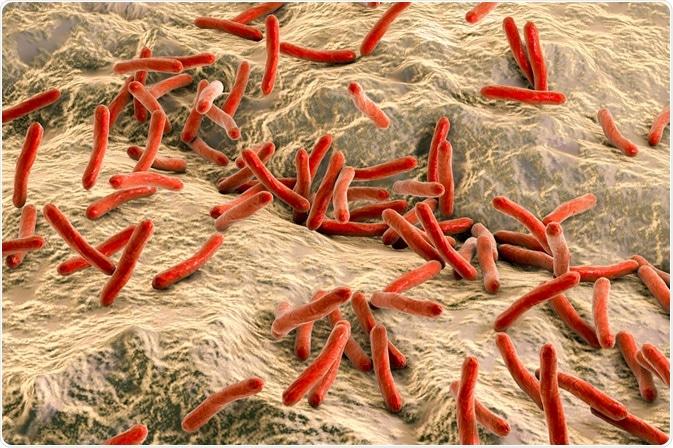 Leprae del M., il batterio che causa la lebbra - da Kateryna Kon