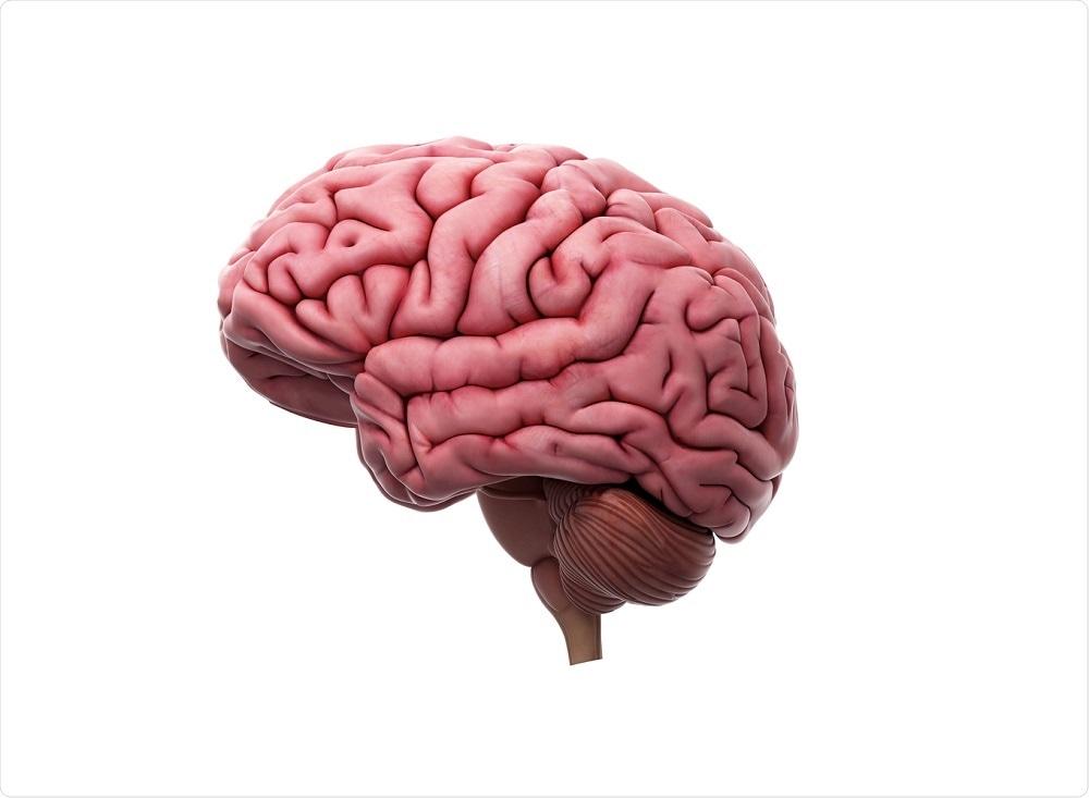 Modelo do cérebro
