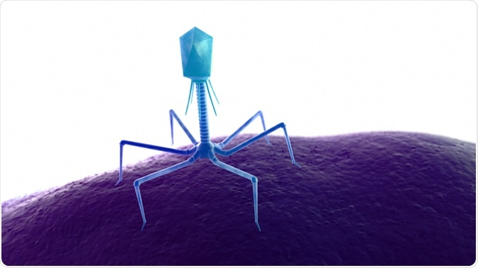 Illustration of a bacteriophage - the component used in phage display - By Sebastian Kaulitzki