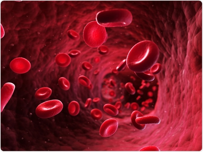Red blood cells in blood vessel - By Sebastian Kaulitzki