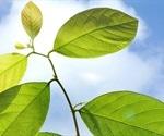 Scientists fix flawed plant genes, make plants grow 40% larger