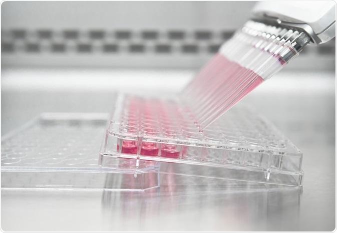 Coltura delle celle HEK293 in una lastra grossa di 96 pozzi in laboratorio - una foto catturata dadel unoL