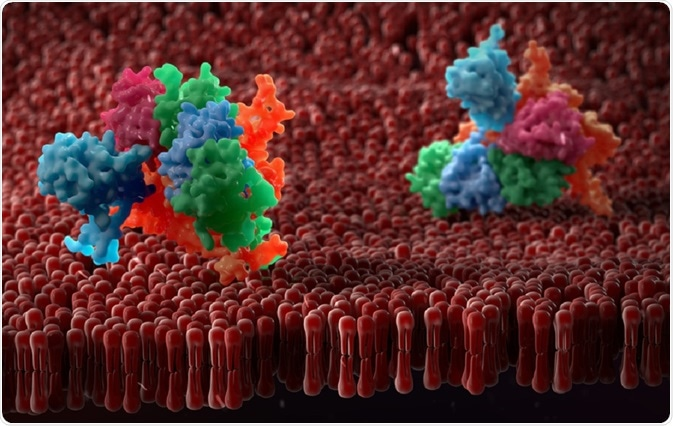 Proteins on cell membrane - an illustration by urfin