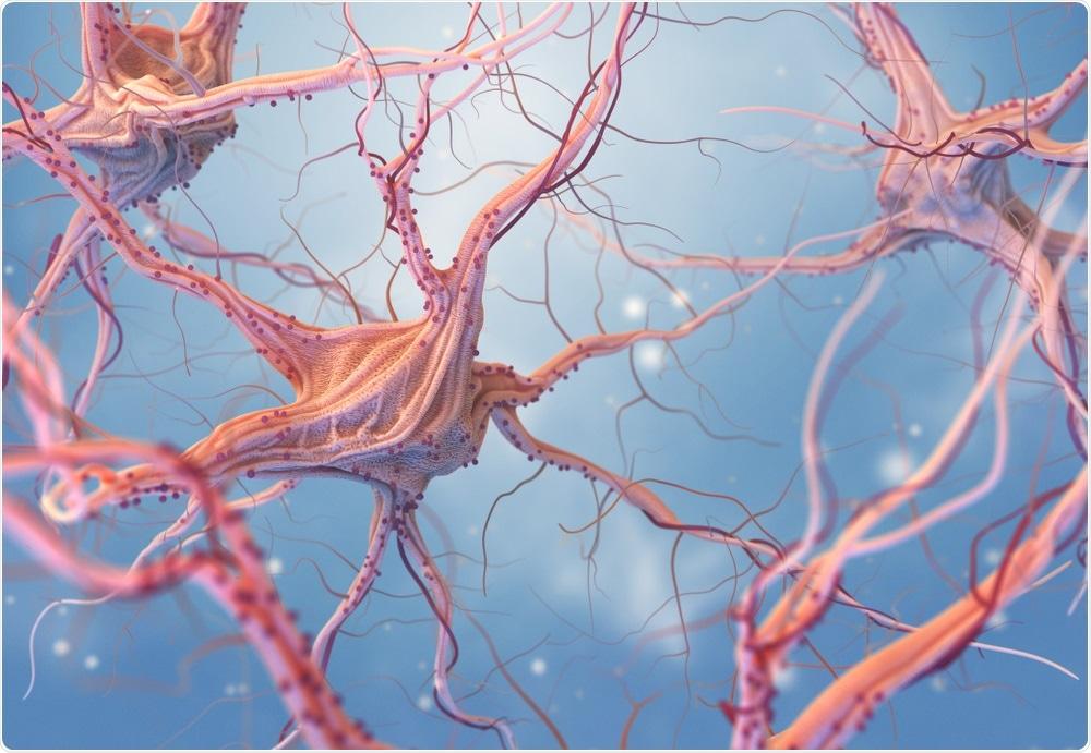 Illustration of nerve cells in the brain - neurotransmitters