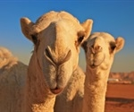 What are Camelid Antibodies?