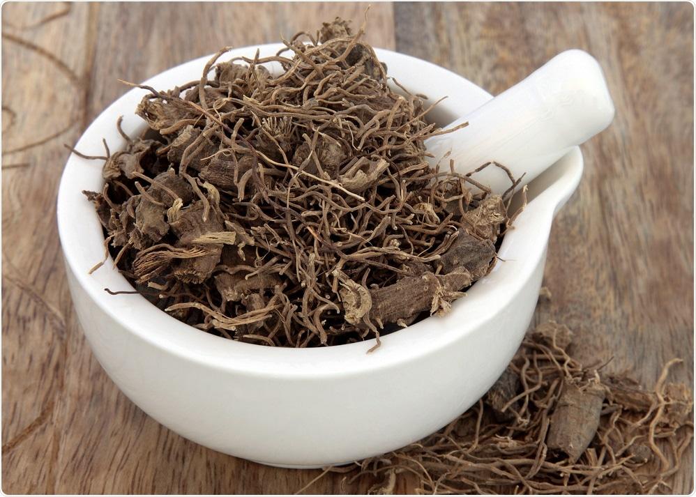 Erva preta da raiz do cohosh usada no fitoterapia alternativo natural sobre o fundo de madeira velho.