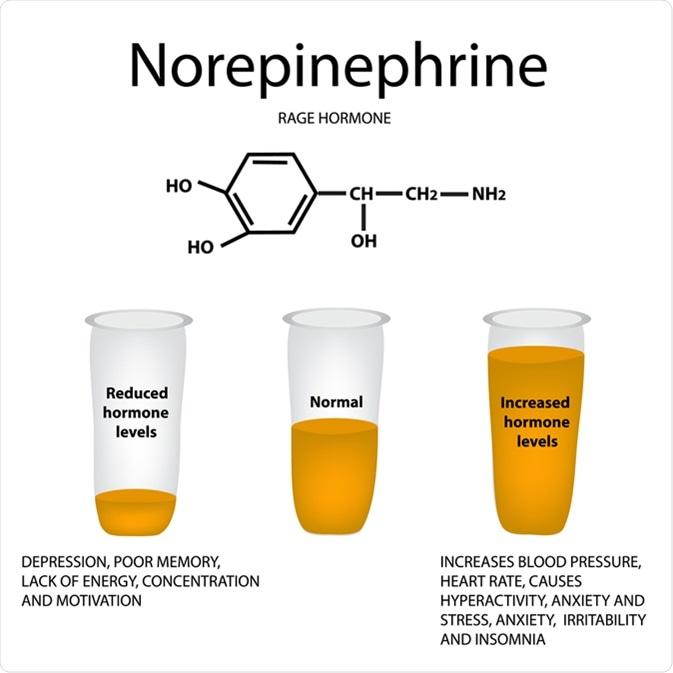 Noradrenalina química de la hormona de la fórmula molecular. Rabia de la hormona. Bajando y aumentando la noradrenalina. Haber de imagen: Timonina/Shutterstock