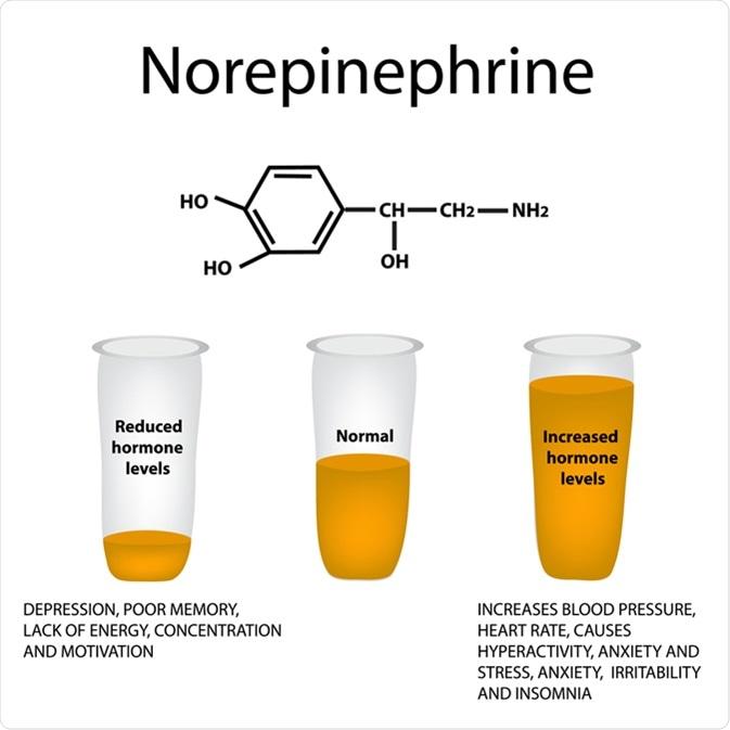 Noradrenalina de la hormona. Haber de imagen: Timonina/Shutterstock