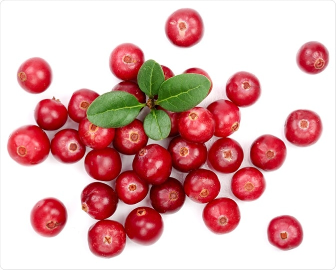 Cranberry. Image Credit: Nataly Studio / Shutterstock
