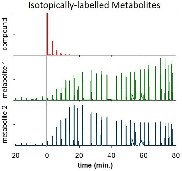 Two isotopically labelled metabolites (green, blue) with individual variations over time, which arise as a result of the ingestion of a labelled compound (red).