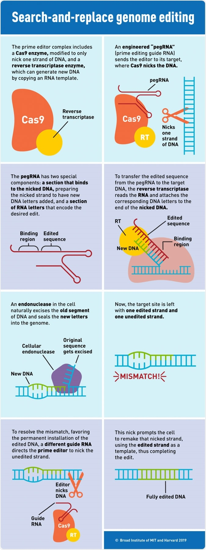 Prime Editing: Search-and-replace genome editing