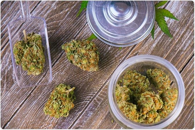 Cannabis buds. Credit: Roxana Gonzalezn / Shutterstock