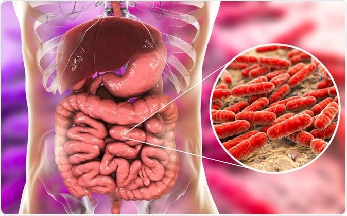 Normal flora of small intestine, bacteria Lactobacillus, 3D illustration. Image Credit: Kateryna Kon / Shutterstock
