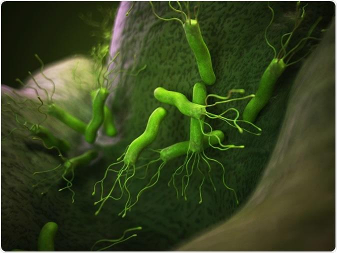 Illustration of the helicobacter pyloris - Image Credit: Sebastian Kaulitzki / Shutterstock