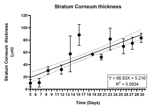 The stratum corneum gets thicker as the Labskin ages. Variability in measurement is due to the separation of the SC.