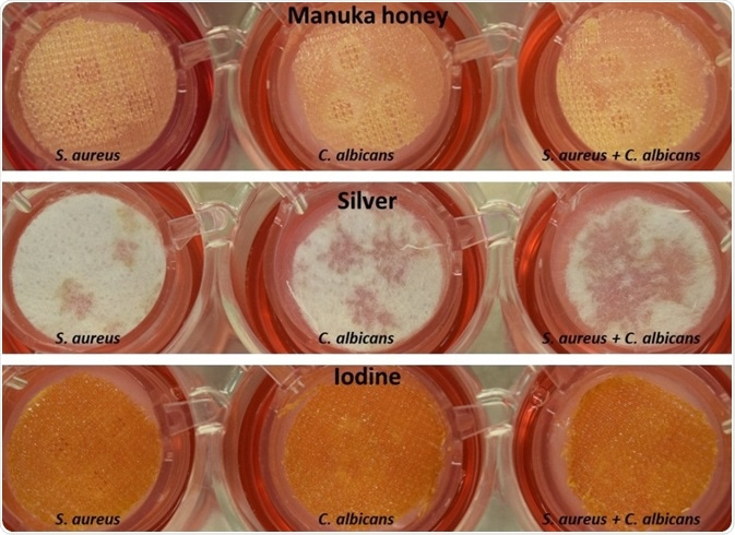 Application of wound dressing after 48 hours of biofilm formation.