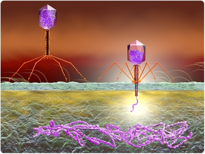 Phage display - bacteriophages inserting genetic material into cell