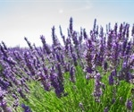 Why granny's herbs work to lower high blood pressure