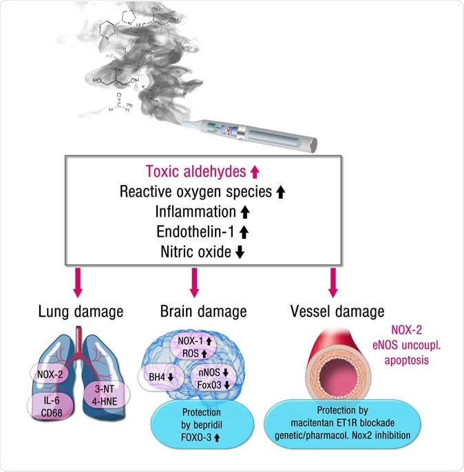 This is an image showing the mechanisms for how e-cigarettes damage the brain, blood vessels and lungs. Credit: European Heart Journal