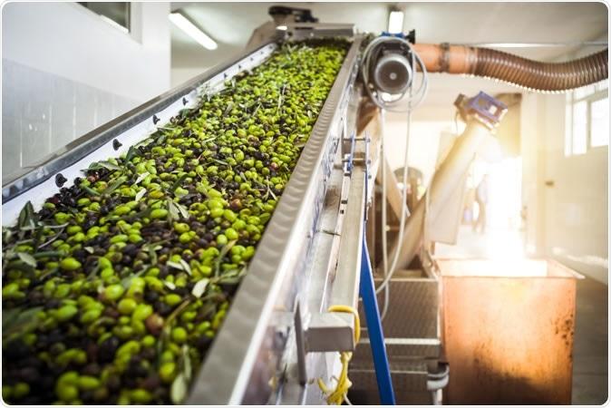 Manufacturing extra virgin Olive Oil in Mola di Bari, Puglia - Image Credit: Sabino Parente / Shutterstock