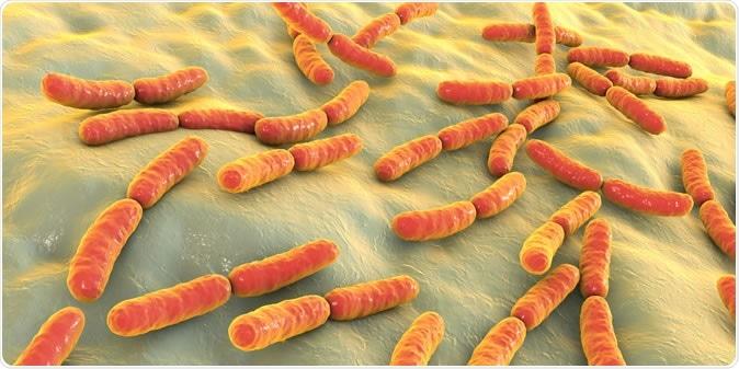 Bacteria Lactobacillus, 3D illustration. Image Credit: Kateryna Kon/ Shutterstock