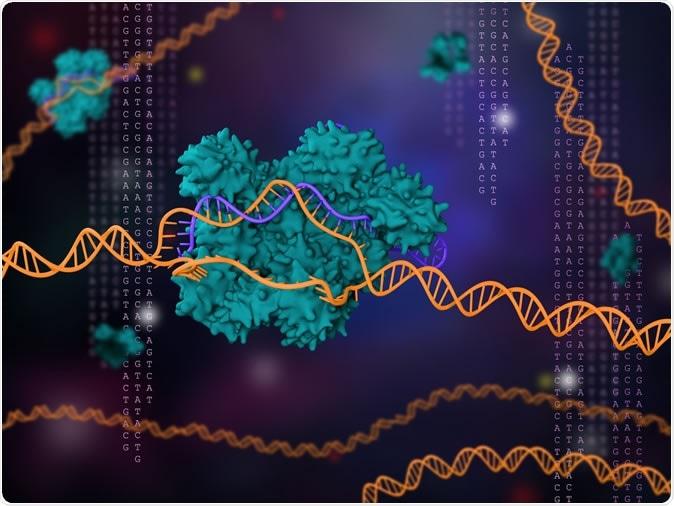 ilustração 3d da tecnologia CRISPR-Cas9. Crédito de imagem: Meletios Verras/Shutterstock