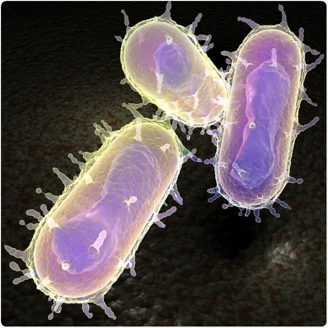 3d representation of the Yersinia pestis bacteria better known as the bubonic plague. Image Credit: MichaelTaylor / Shutterstock