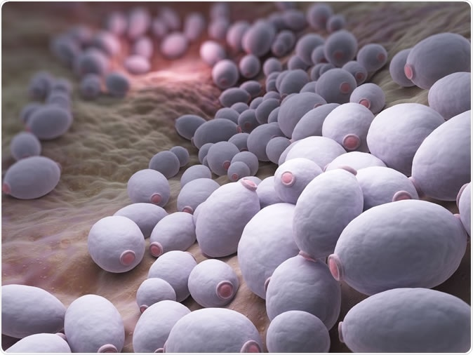 Candida albicans is a diploid fungus that grows both as yeast and filamentous cells and a causal agent of opportunistic oral and genital infections in humans - Illustration Credit: Tatiana Shepeleva / Shutterstock