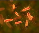 Bacteriophages could treat E. coli without damaging the gut, new study says