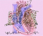 Discovery of molecular origins of a heart beat