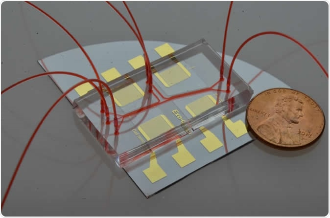 Acoustofluidic exosome isolation chip for salivary exosome isolation. The microfluidic channel is shown by red dye solution and the coin demonstrates the size of the chip. Two pairs of gold interdigital transducers are deposited along the channel, which separates particles according to size. Image Credit: The Journal of Molecular Diagnostics