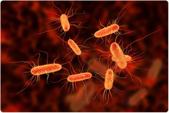 Escherichia coli bacterium, E.coli, gram-negative rod-shaped bacteria, part of intestinal normal flora and causative agent of diarrhea and inflammations of different location, 3D illustration Credit: Kateryna Kon / Shutterstock