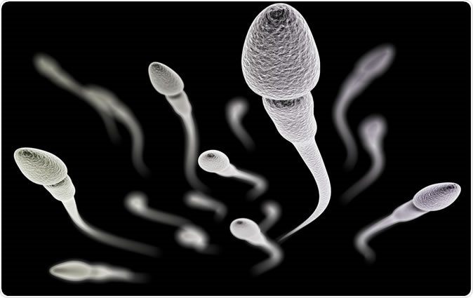 Visualization of the sperm with (electronic microscope simulation) - Illustration Credit: 3dmotus / Shutterstock