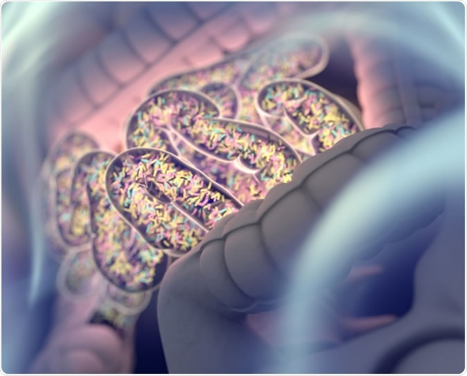Gut bacteria, gut flora, microbiome 3D illustration. Image Credit: Anatomy Insider / Shutterstock