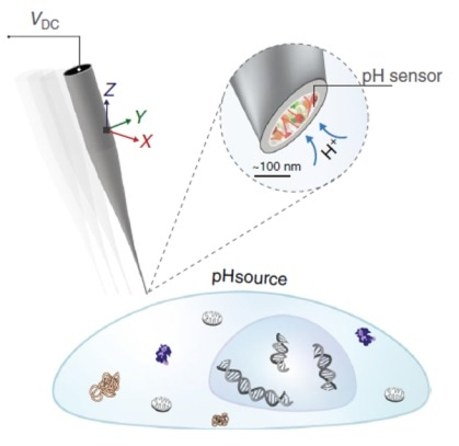 Novel nanopipette pH biosensor could help with cancer diagnosis and treatment