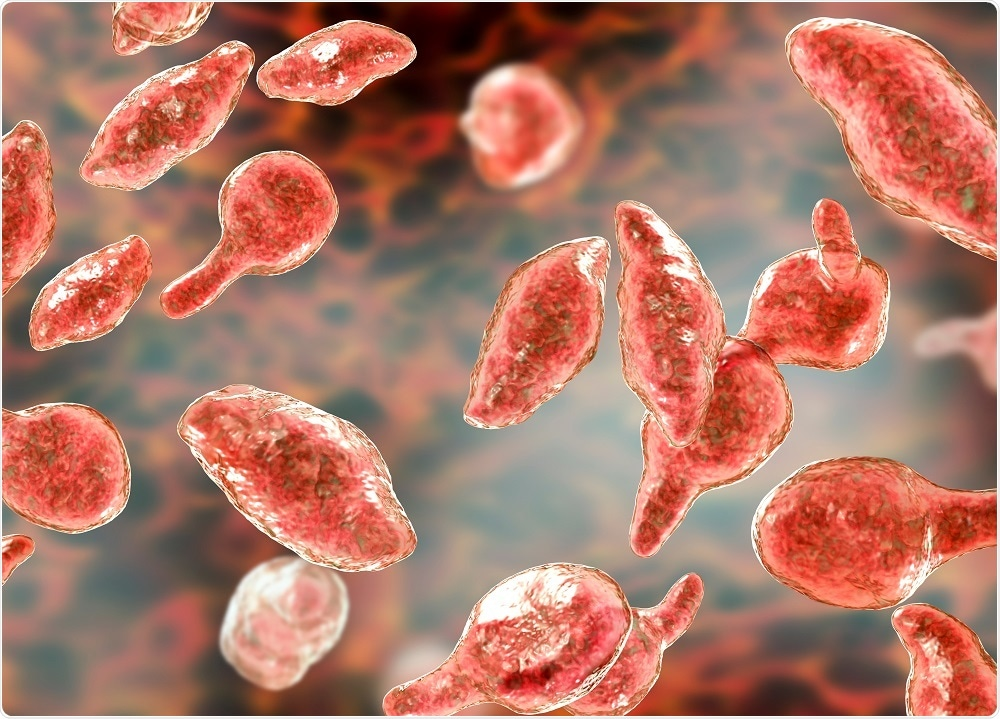 Mycoplasma image