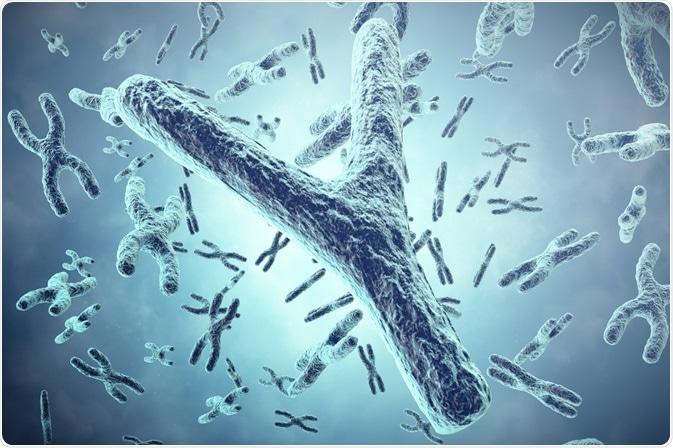 chromosome y