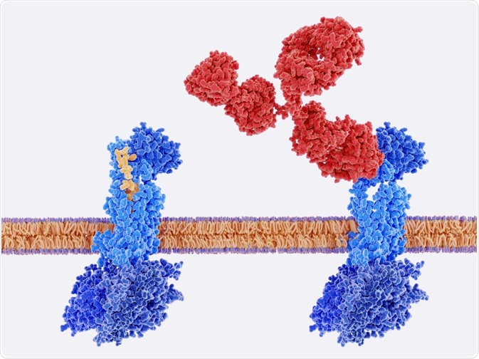 GPCR signaling pathway being controlled by CNO