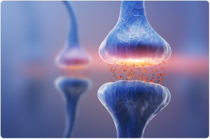 neurotransmission entre deux cellules nerveuses - des neurotransmetteurs peuvent s