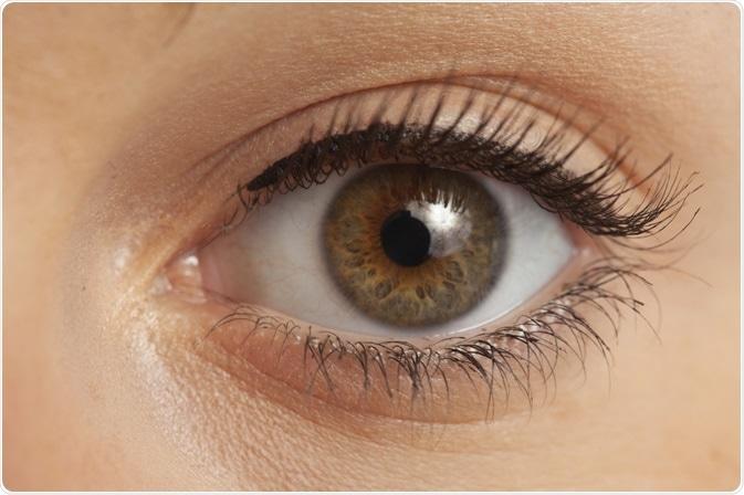 Image of the human eye