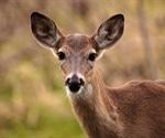 """""""Zombie Deer"""" disease scare"""