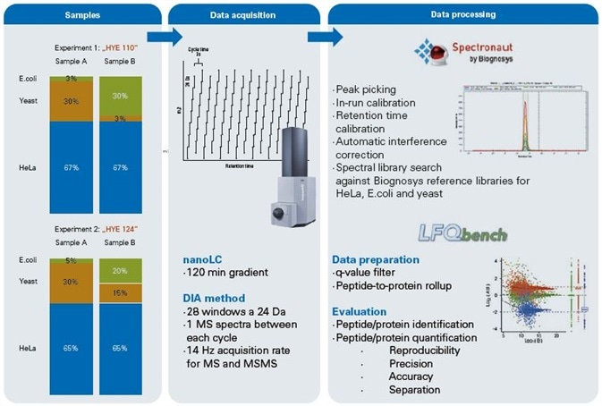Workflow. Two experiments (HYE110 and HYE124) were prepared containing known quantities of human, yeast and E.coli peptide digests. Both samples differed in their ratios with sample HYE110 having higher ratios.Data acquisition was done using a nanoElute (Bruker Daltonics) nano flow UPLC coupled to an impact II Q-TOF instrument (Bruker Daltonics). Five technical replicates of each sample were analyzed in DIA acquisition mode using 24 Da window size. Data processing was done using Spectronaut software (Biognosys) for advanced peak picking and spectral library search. Subsequently LFQbench was used for in-depth data evaluation of peptide/protein identification and quantification.
