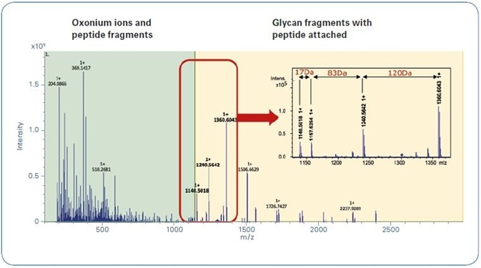 Typical glycopeptide CID spectrum achieved by using the Glycopeptide Instant Expertise™ method.