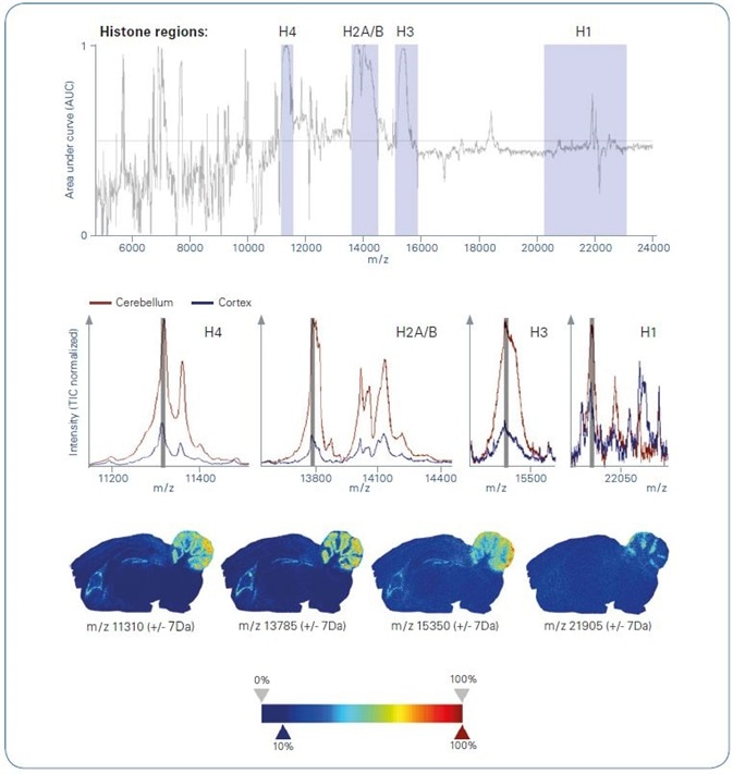 ROC analysis of intact protein MALDI imaging data , comparing cerebellum with cortex as obtained from segmentation analysis. Top: ROC plot. Grey-colored m/z ranges indicate histone regions; Center: Overlayed average spectra representing cerebellum (brown) and cortex (blue) zoomed into histone-specific m/z regions; Bottom: Ion images of example m/z features representing various histone m/z region