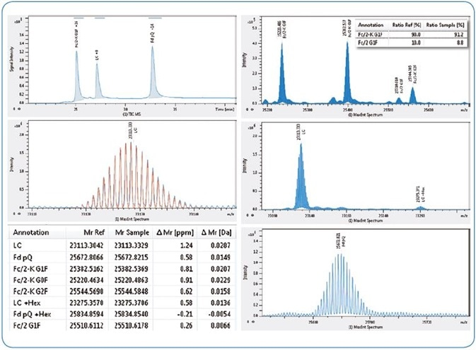 Subunit domain analysis of NIST antibody. Left from top, LC-MS TIC chromatogram, NIST LC acquired isotopic pattern (blue) overlaid with theoretical (red), table of results (abridged). Right from top, maximum entropy deconvoluted spectra for NIST Fc/2 (insert shows relative quantitation of lysine clipping), LC and Fd subunits.