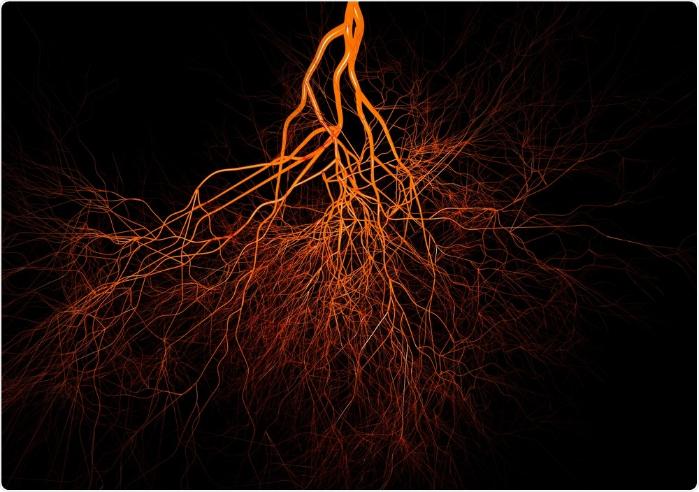 Scientists have grown blood vessels in the lab