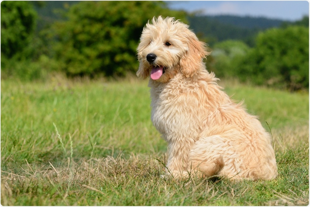 Dogs can be trained to stiff out seizures