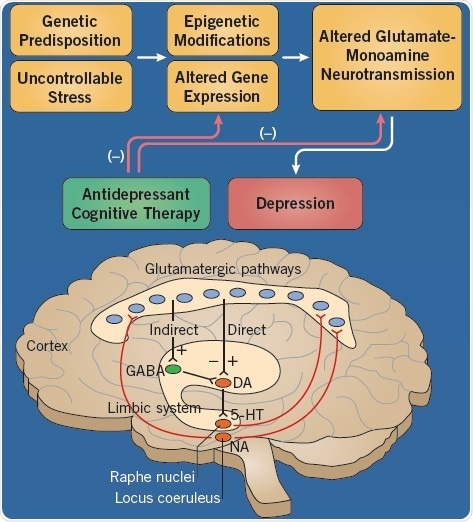 The etiology of depression