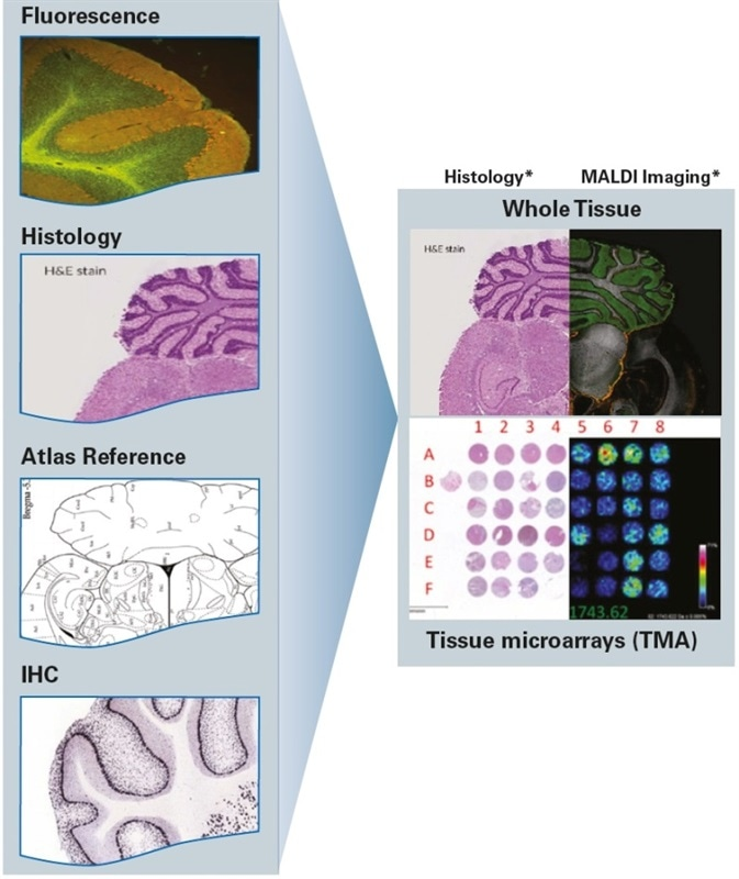 Add Molecular Specificity to Other Imaging Techniques